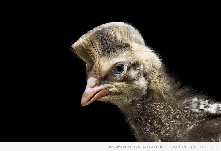 Pájaro hipster con el corte de pelo en cresta