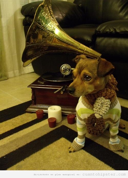 Perro hipster con jersey a rayas y gramófono