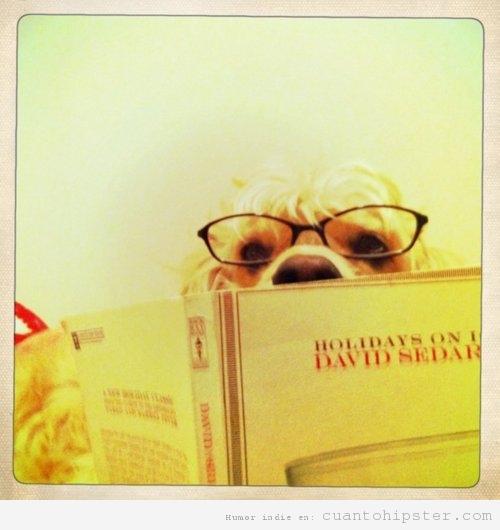 Perro leyendo
