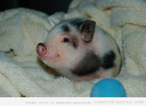 Cerditos bebé - Imagui