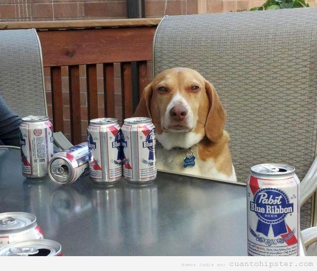 Perro hipster con cervezas PBR