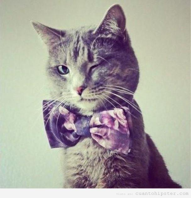 Gato gris con largos bigotes que guiña el ojo y viste una pajarita