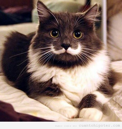 Gato con una mancha que parece un bigote hipster