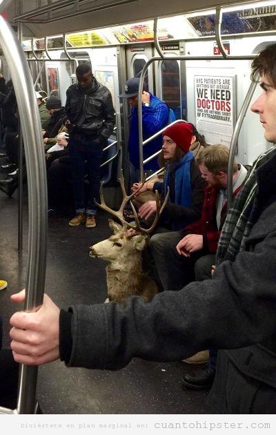 Imagen de un hipster en el metro con cabeza de llama disecada