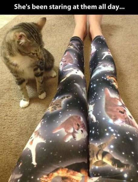 Foto graciosa, gato mira las mallas de gatos en la galaxia