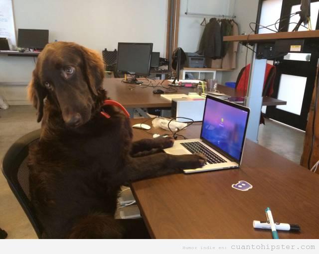 Foto graciosa perro hipster con macbook