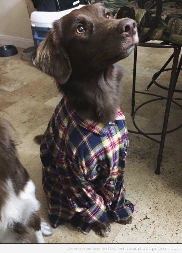 Perro hipster camisa franela de cuadros
