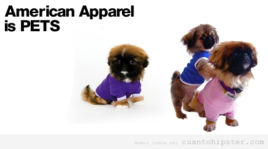 Ropa para perros hipsters by American Apparel
