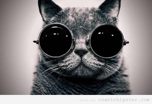 Gato hipster con gafas retro