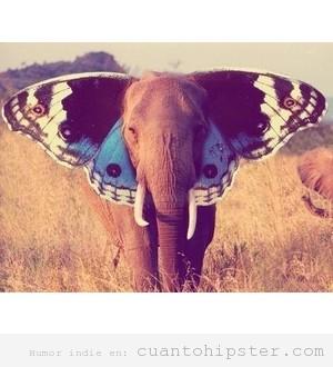 Butterphant, mitad mariposa mitad elefante, animal hipster