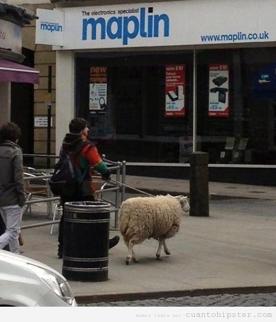 Chico que pasea a una oveja por la ciudad