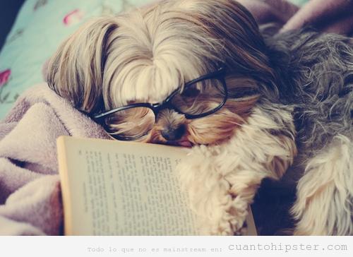 Perro de postureo con gafas de pasta y libro