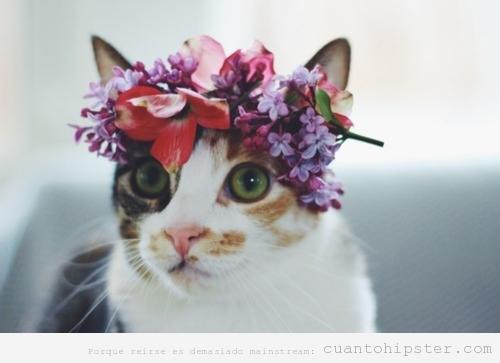 Gato con flores en la cabeza estilo Lana del Rey