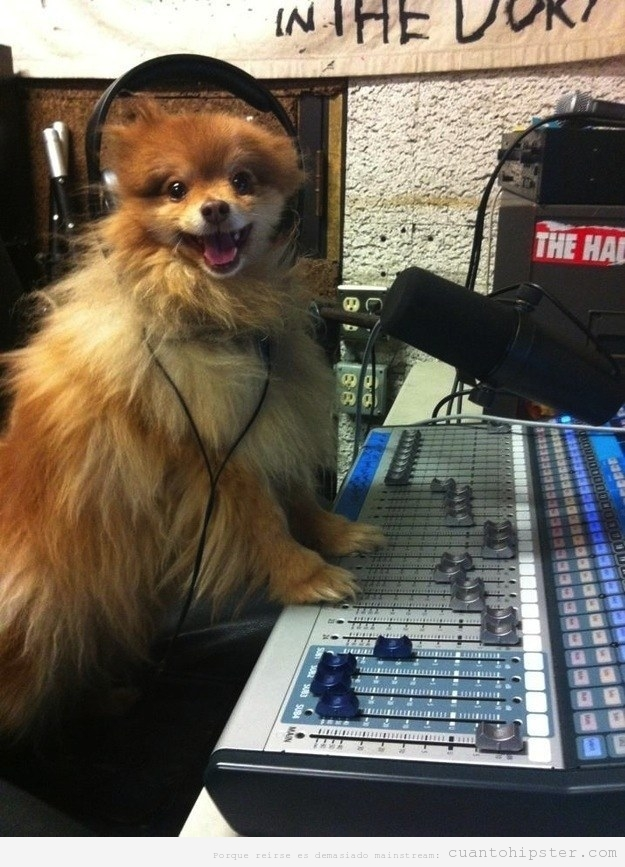 Foto divertida perro locutor radio