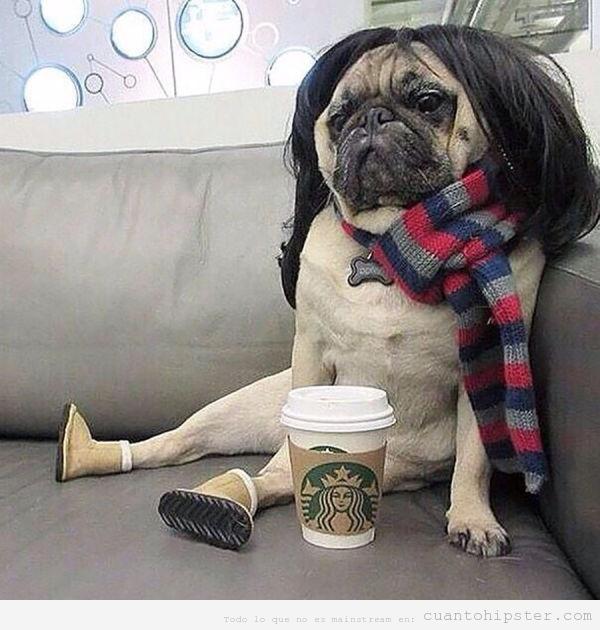 Imagen de un perro carlino con peluca, bufanda y café de starbucks