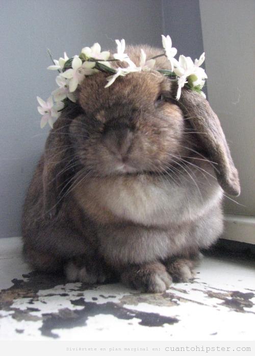 Foto graciosa de un conejo con una corona de flores