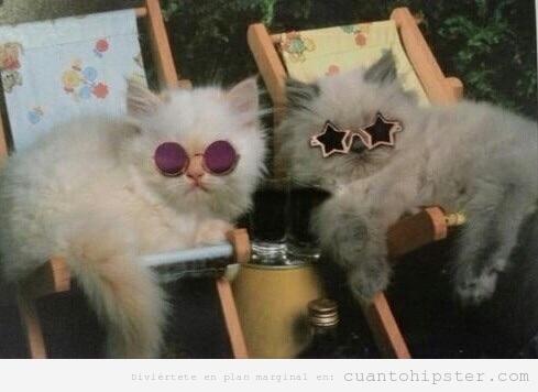Foto de dos gatos tomando el sol con gafas hipsters