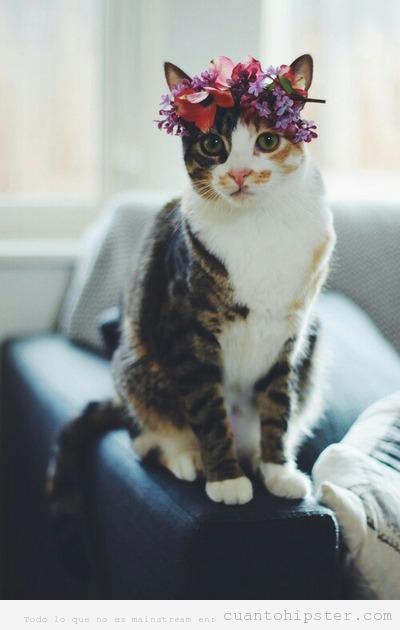 Gato hipster con corona de flores