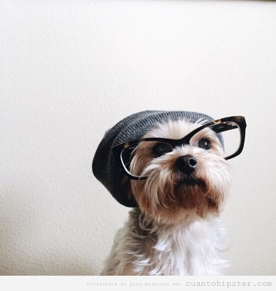 Perro hipster con gorro y gafas de pasta