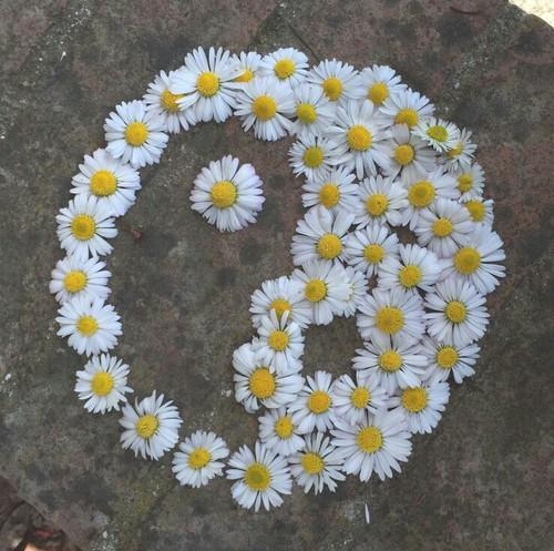 Símbolo yin yang hecho con  margaritas