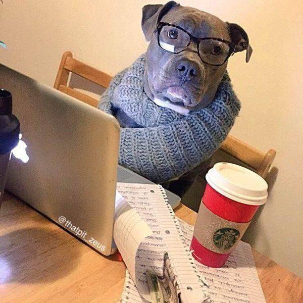 Perro hipster con un mac. gafas de pasta y café de starbucks