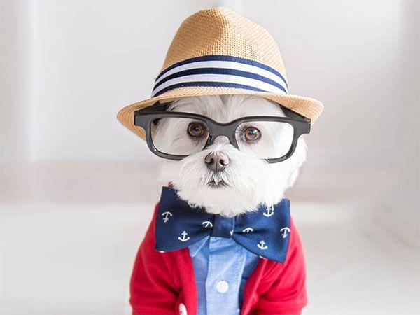 Toby, el perro hipster