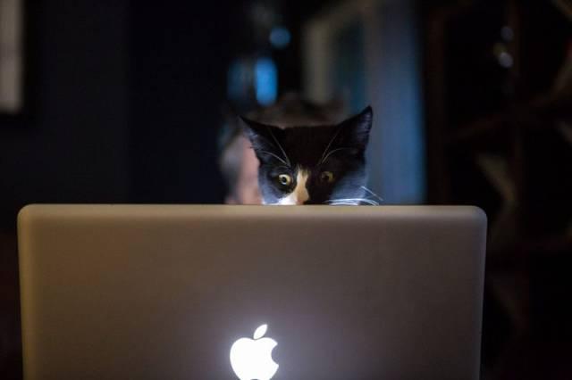 Gato en un ordenador Apple
