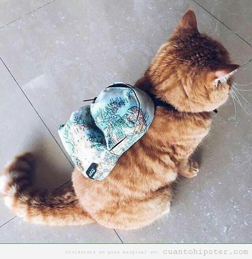 Foto graciosa gato hipster con mochila mapamundi