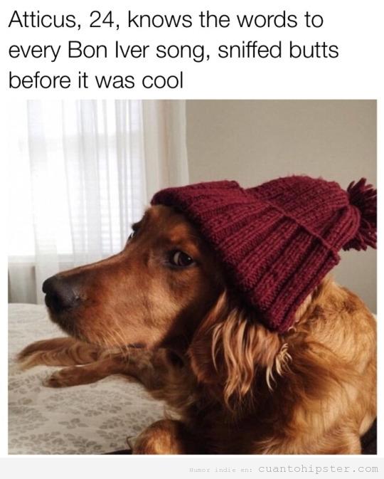 Perro look hipster con gorro